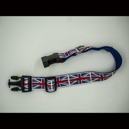 Union Jacks on Royal Blue Collar