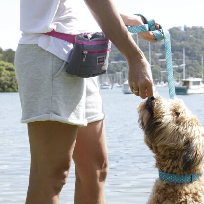 Doog Treat and Training Pouch