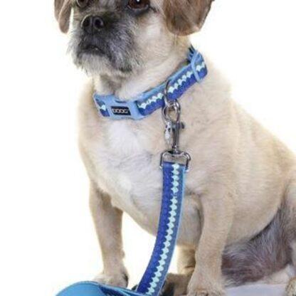 DOOG Pluto COLN1 Dog Collar